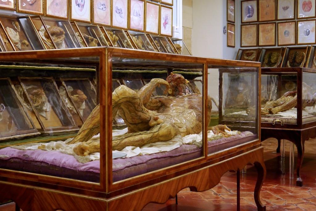 Anatomische Wachsfigur im Naturkundemuseum der Universität von Florenz.