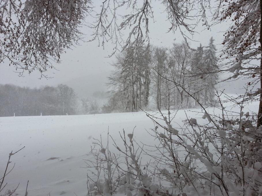 Unterwegs im Winterwald nahe Küssaburg und Grenze zur Schweiz