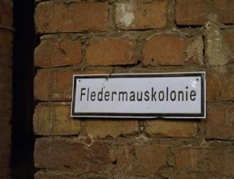 Kreuzberg Denkmal und die Fledermaus