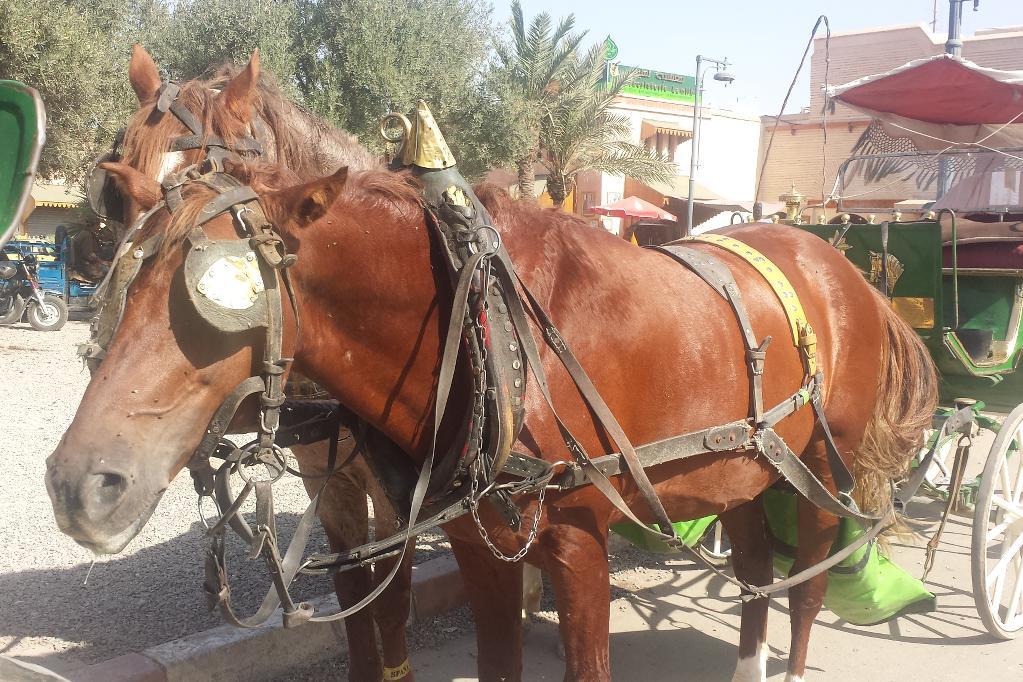 marrakesch-perdekutsche