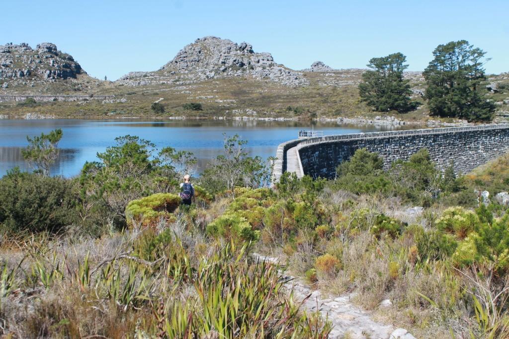 Kapstadt - auf dem Tafelberg