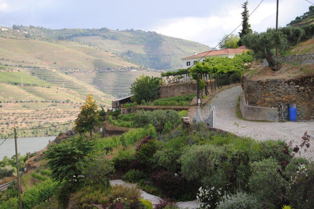 pinhao-quinta-blick-douro-berghänge