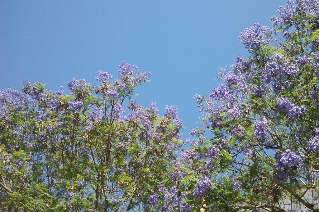 Portugals Wunderbaum