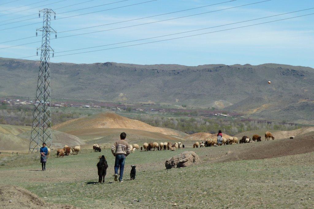 kurdistan kinder schafhirten