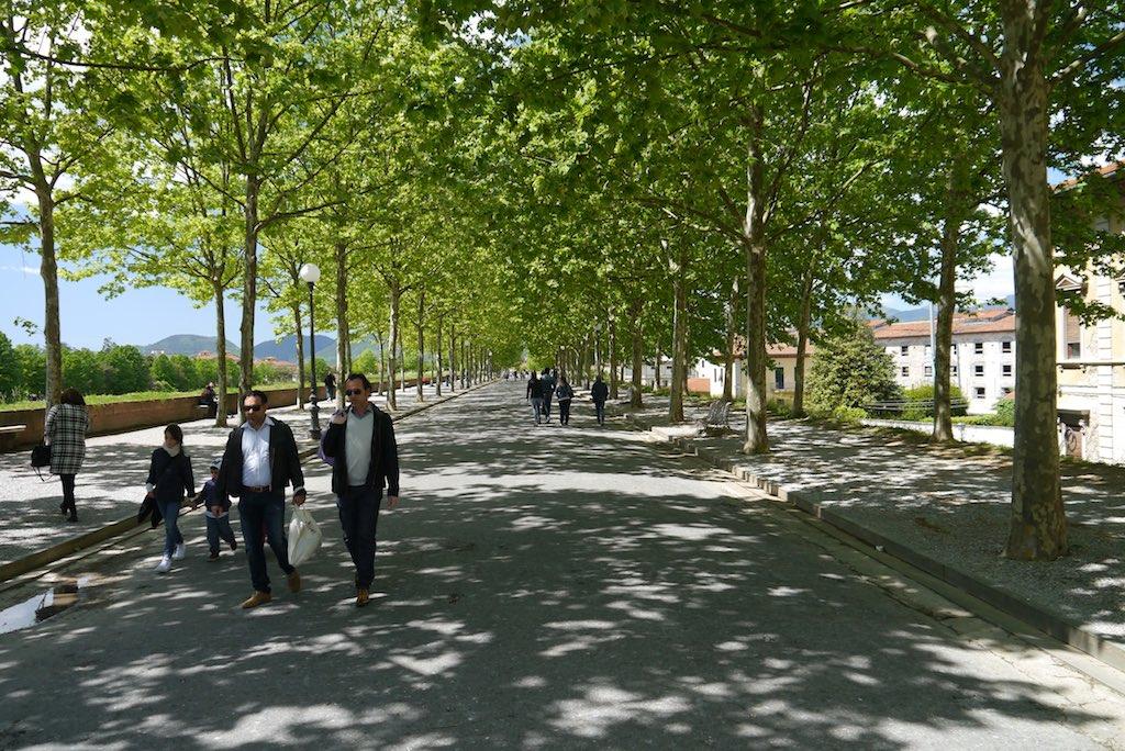 Blick auf die Stadtmauer von Lucca. Spaziergänger unter Plantanenbäumen