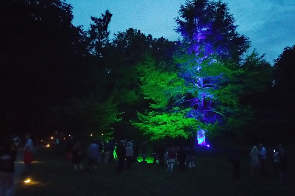 Rieseneibe, Sumpfzypresse, Mammutbaum: Bei Nacht wirken die gewaltigen Exoten im englischen Landschaftspark von Schloss Dyck noch riesenhafter.