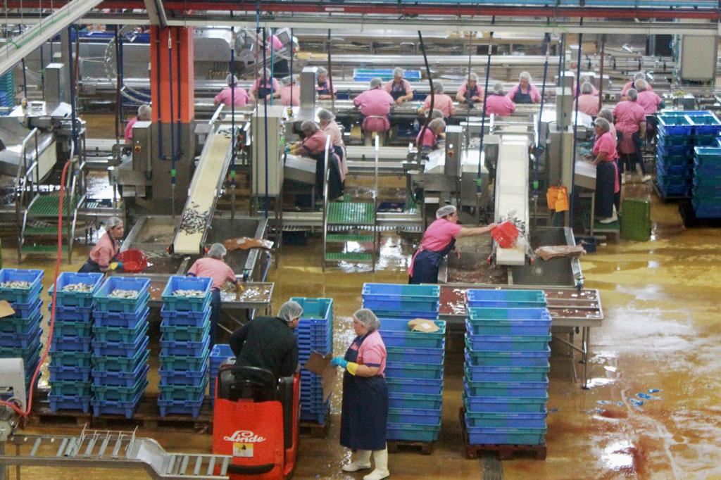 Porto, die Geschäftige: Immer noch reine Frauenarbeit: Hier werden die Fische vorbereitet, in die Dosen gelegt, in den Dosen gegart und dann verschlossen.