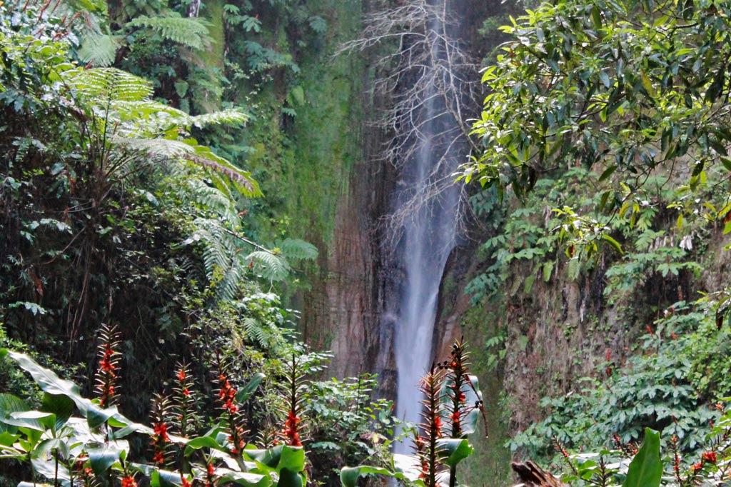 Azoren Paradies: Paradiesische Kulisse: der Salto do Rosa in den Wäldern der Lagoa das Furnas