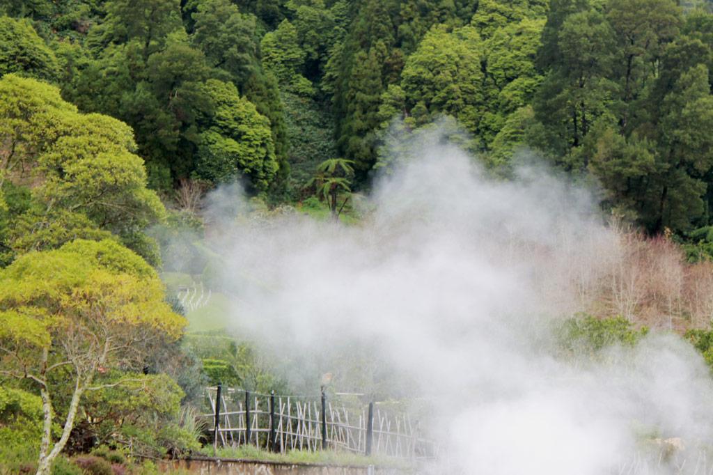 Azoren Paradies: Das ist kein Frühnebel, der hier im Wald aufsteigt, sondern der Dampf von Fumarolen und Solfataren am Ufer der Lagoa das Furnas.