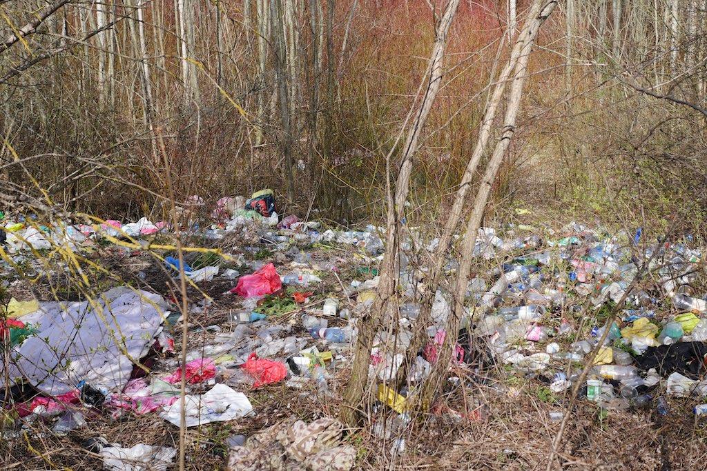 Müllhalde in einem Birkenwäldchen.