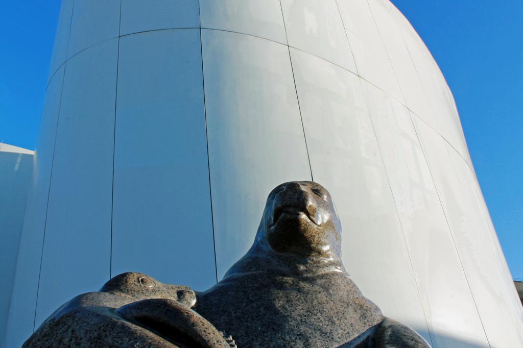 Stralsund: Die Robben genießen die Sonne. Die Außenhaut des Museums ist nicht halb so glatt wie ihre eigene.
