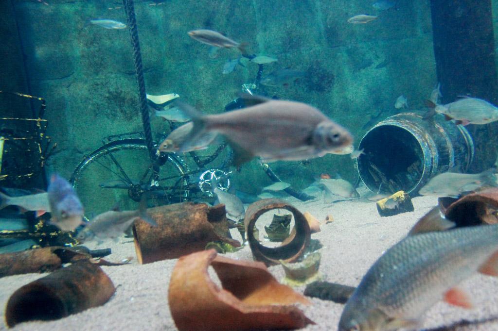 Stralsund: Unterwasseridylle mal anders: ein ganz normales Hafenbecken als Museumsobjekt.