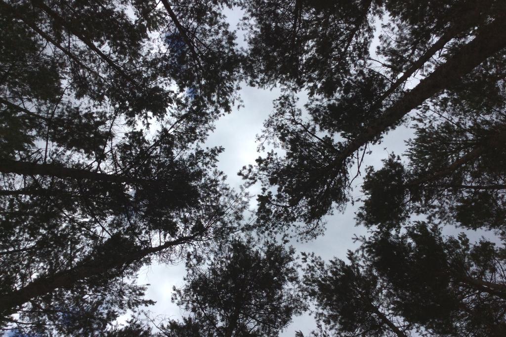 Baumwipfel geben in ihrer Mitte den Blick in den Himmel frei. Die Aufnahme ist eine Spiegelung, entstanden über eine Naturerlebnis Station namens Baumspiegel.