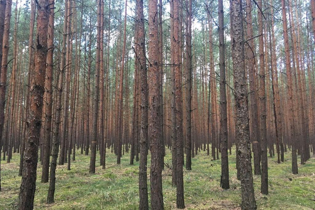 Eine Ansammlung von Baumstämmen, ein dichter Wald. Dieses Szenario umgibt die Besucher von Brandenburgs größtem Naturerlebnispark.