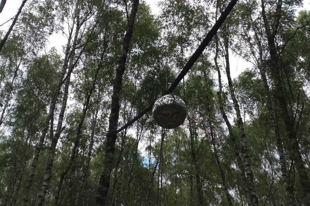 Eine dichte Ansammlung von Baumkronen. In ihrer Mitte hängt eine Diskokugel. Ihre obere Hälfte funkelt durch die Reflektion des Sonnenlichts.