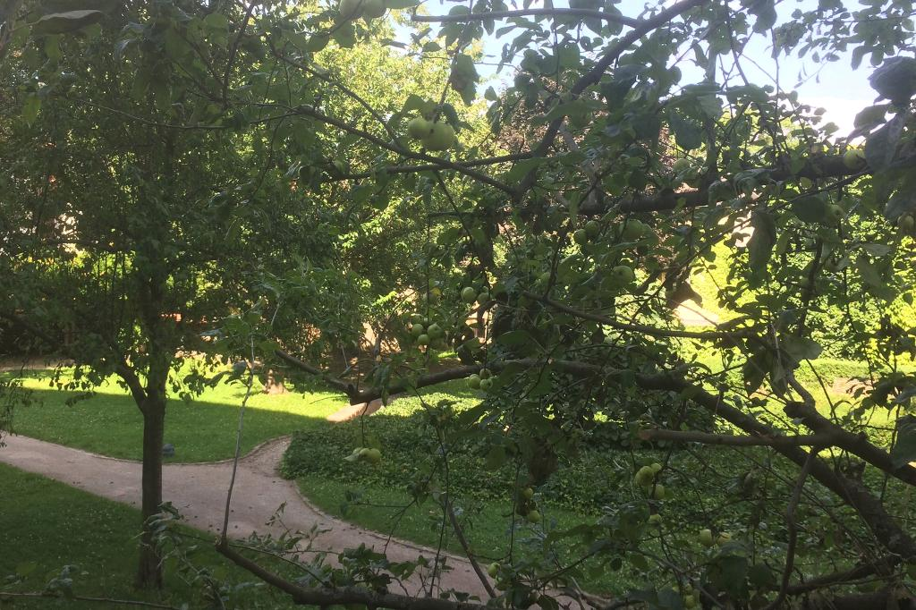 Jena Garten