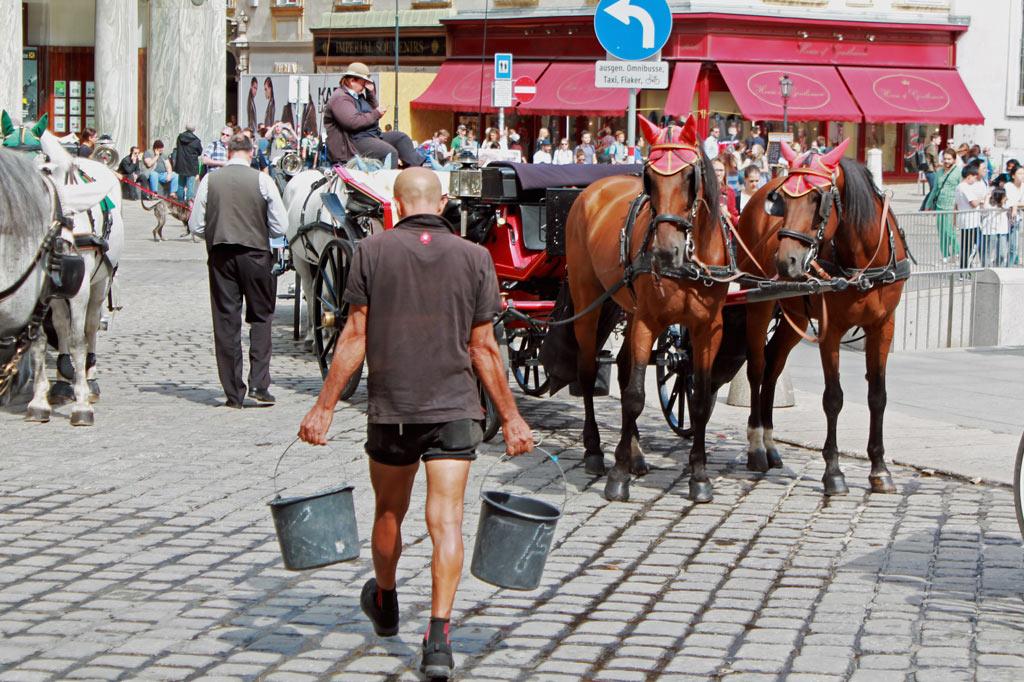 Wien: Die Fiaker-Rundfahrt haben wir uns gespart. Dafür, dass die berühmten Zweispänner täglich rollen, arbeiten nicht nur die Gäule wie die Pferde.