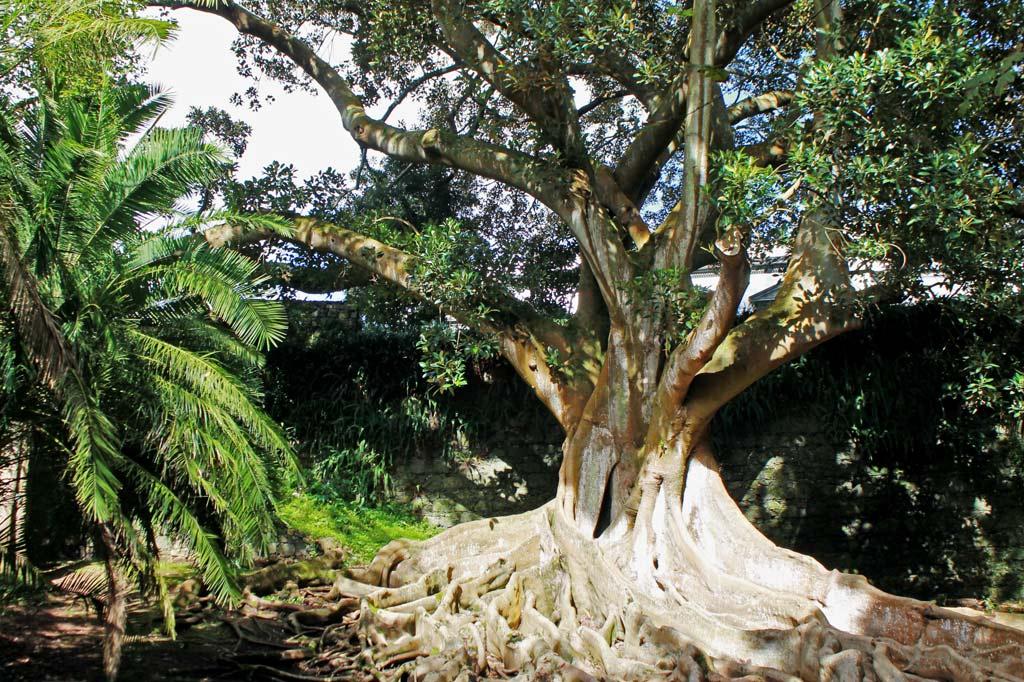 Delikatessen: Die exotische Pflanzenwelt des Jardim José do Canto als Hotelsetting – das hat leider nicht geklappt. Angesehen haben wir uns den Park trotzdem.