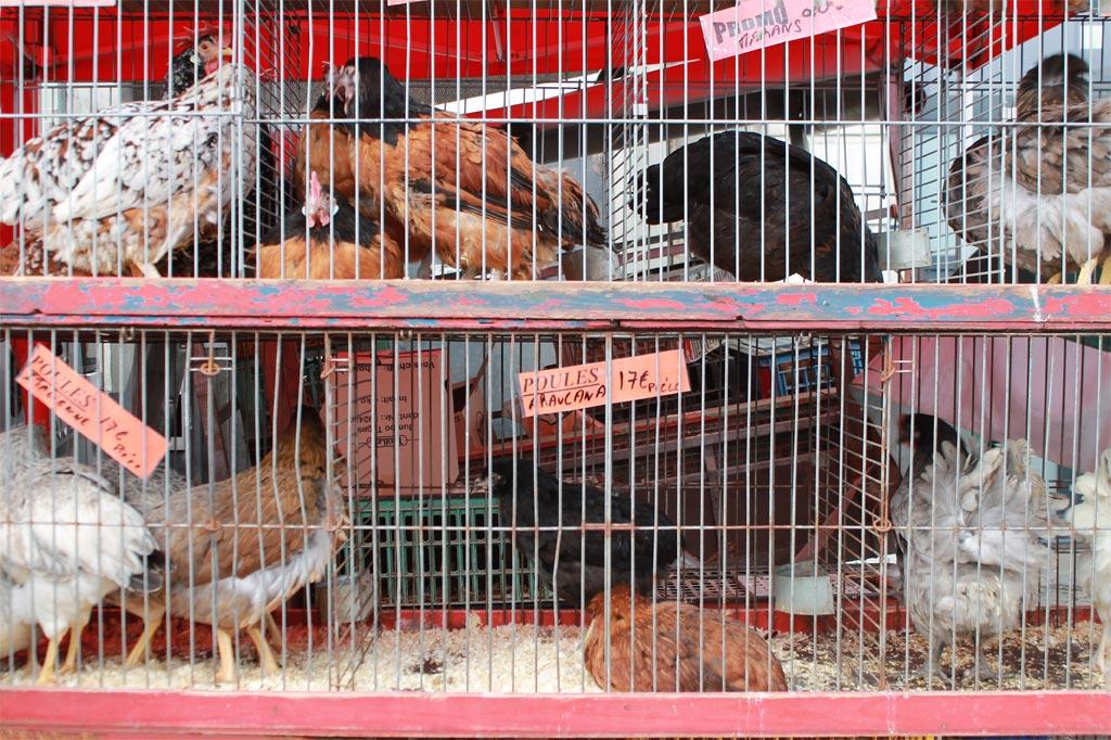 Käfige mit lebenden Hühnern auf dem Marché de la Batte.