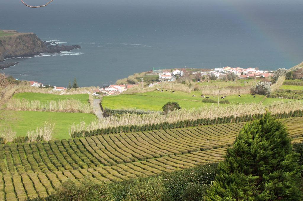 Zum Tee auf die Azoren-Inseln: Teeplantagen an der Nordküste von São Miguel, effektvoll in Szene gesetzt von den für die Azoren typischen Wetter-Kapriolen.