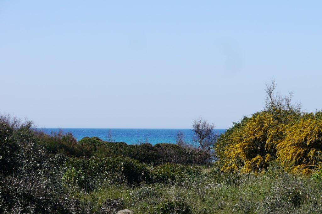 Das Bild zeigt die Dünenlandschaft an der Küste Apuliens. Ans Meer zu fahren ist der absolute Apulien Tipp. Im Vordergrund des Bildes wachsen Ginsterbüsche mit gelben Blüten. Im Kontrast dazu das strahlende Blau des Meeres.