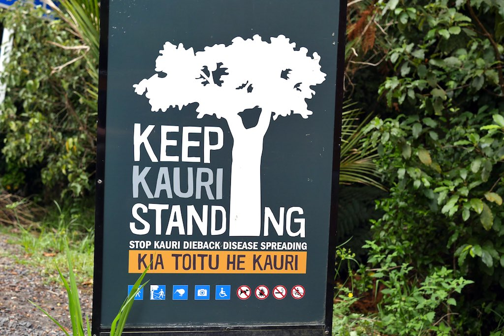 Warnschild vor Kauri Dieback Desease.