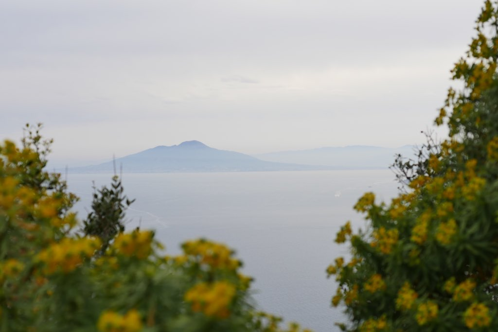Blick vom Monte Timberio in Capri auf den Vesuv. Im Vordergund gelbe Wolfsmilch