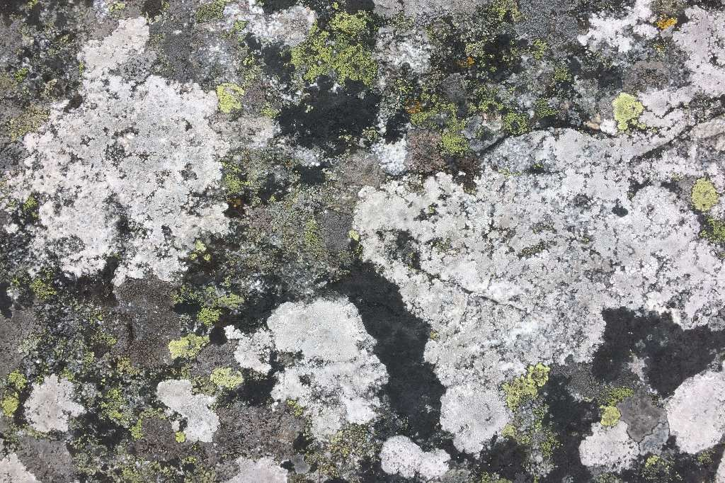 Felsen in den Schärengärten von Göteborg.