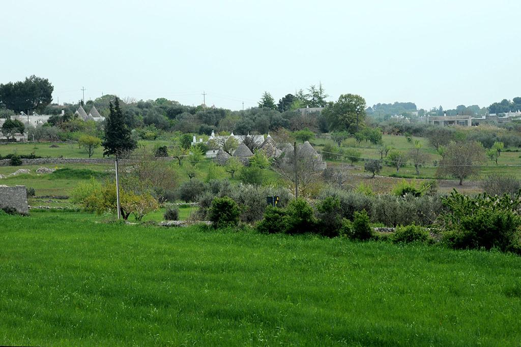 Grüne Felder, Ölbäume und Trulli in der Nähe von Alberobello in Apulien.