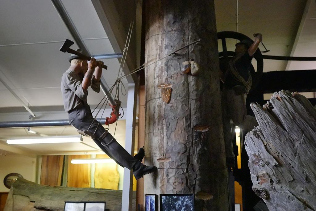 Display im Kauri Museum vn Matakohe. An einem Baumstamm ist ein Mann mit Steigeisen hinaufgeklattert, der mit einem Beil, die Rinde des Baumes verletzt, um damit die Harzproduktion auszulösen.