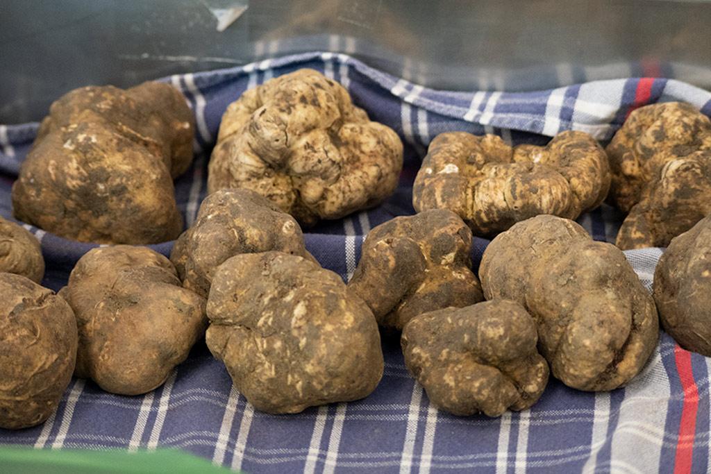 Weiße Trüffel in einer Metallbox, die mit einem karierten Küchenhandtuch ausgelegt ist. Trüffel sehen aus wie Kartoffeln.