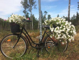 Schweden. 7 Tipps für deine Reise
