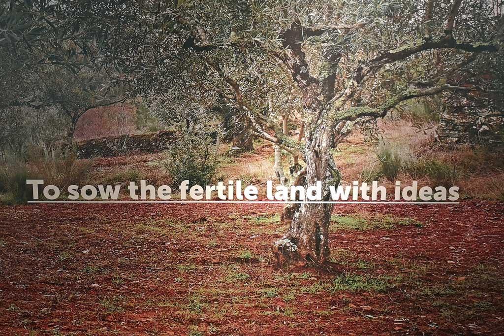 """Ab aufs Land: Dorfkultur made in Portugal – Foto eines Olivenbaus mit der Überschrift: """"Ideen säen auf fruchtbarem Land"""""""