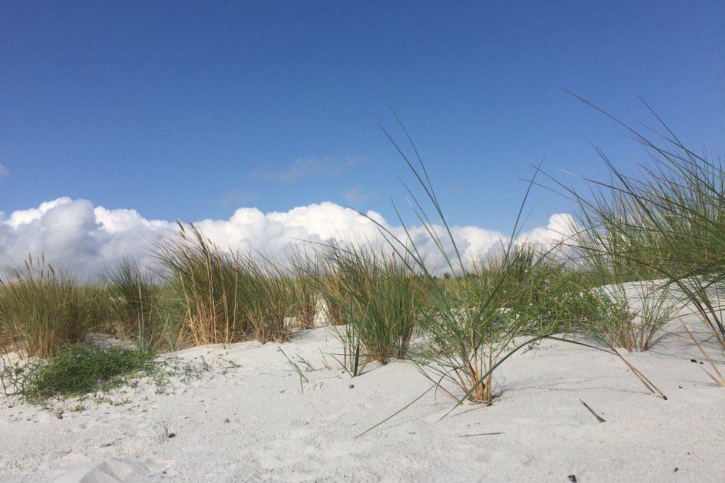 Strandhafer auf weißer Düne vor blauem Himmel.