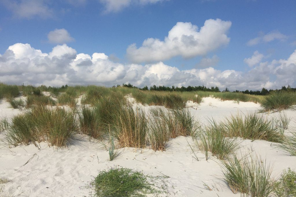 Weiße Dünen, locker mit Strandhafer bewachsen, füllen das Bild bis zur Mitte. Am Horizont erhebt sich eine Baumlinie, darüber eine Schicht weiße Wattewolken, gekrönt von blauem Himmel.