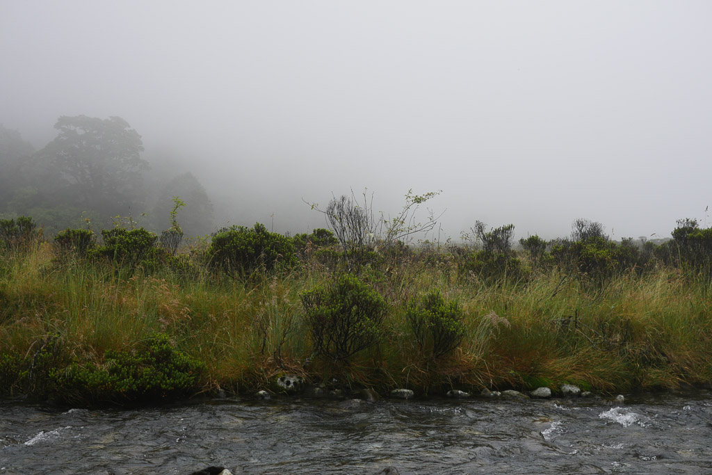 Monkey Creek auf der Straße zum Milford Sound.
