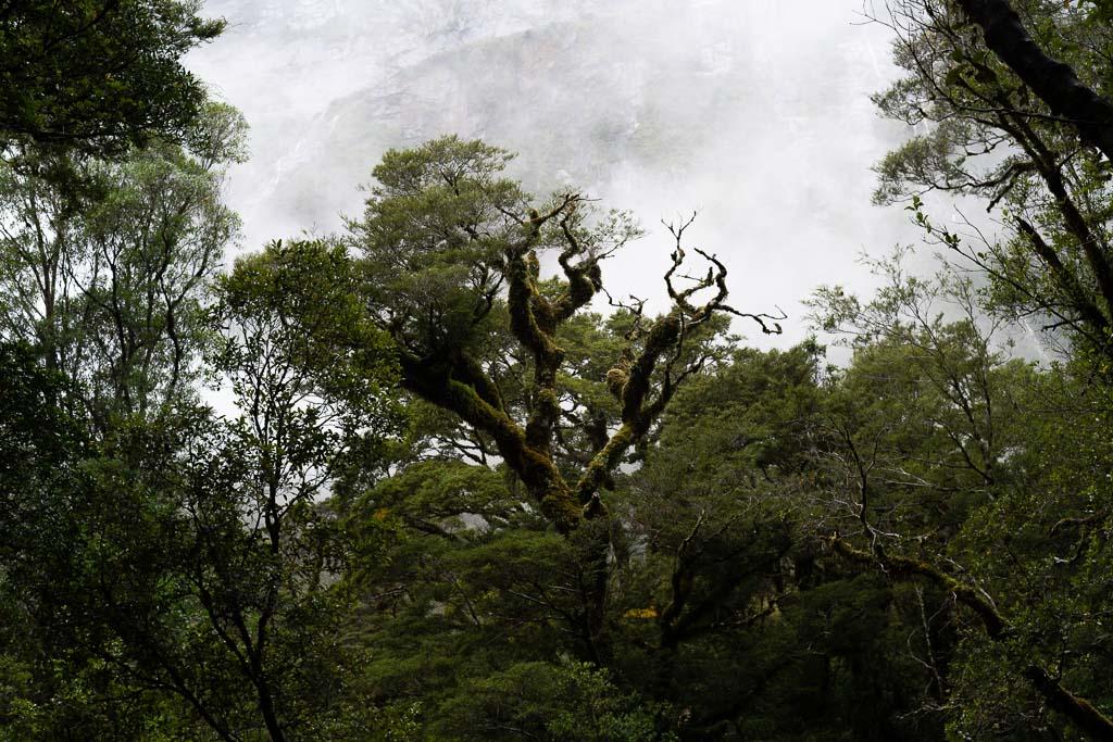 Regenwald mit Nebel im Fiordland Nationalpark in Neuseeland.