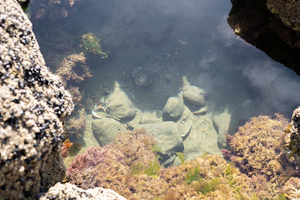 Das Bild zeigt einen großen Stein, der wie eine Wanne ausgewaschen ist. In dieser Wanne befindet sich Meerwasser. Am Boden der Wanne liegt Sand, Muscheln, Schneckenhäuser. An den Wänden wachsen bunte Algen,