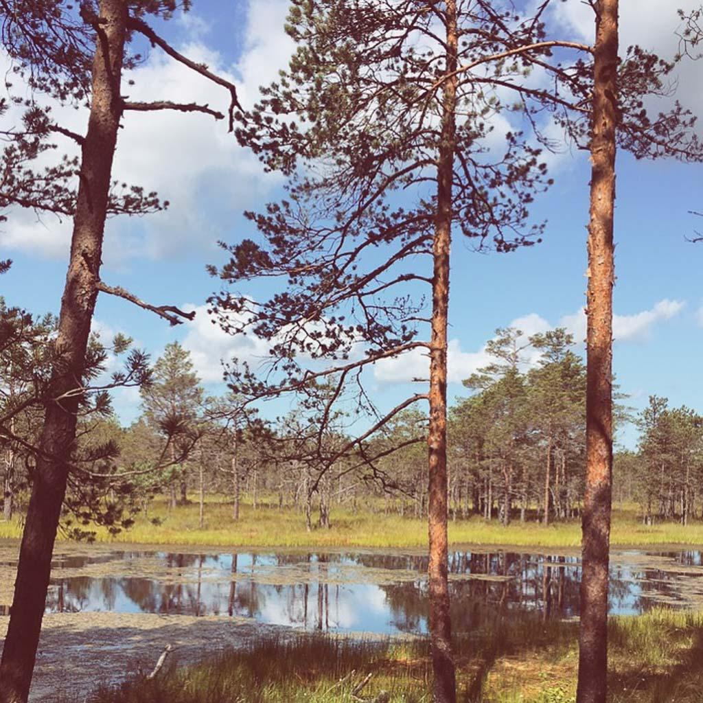 Moorteich im Lahemaa Nationalpark bei Tallinn.