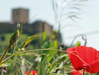 Blumen & Burgen: Wandern im Alentejo bei Belver