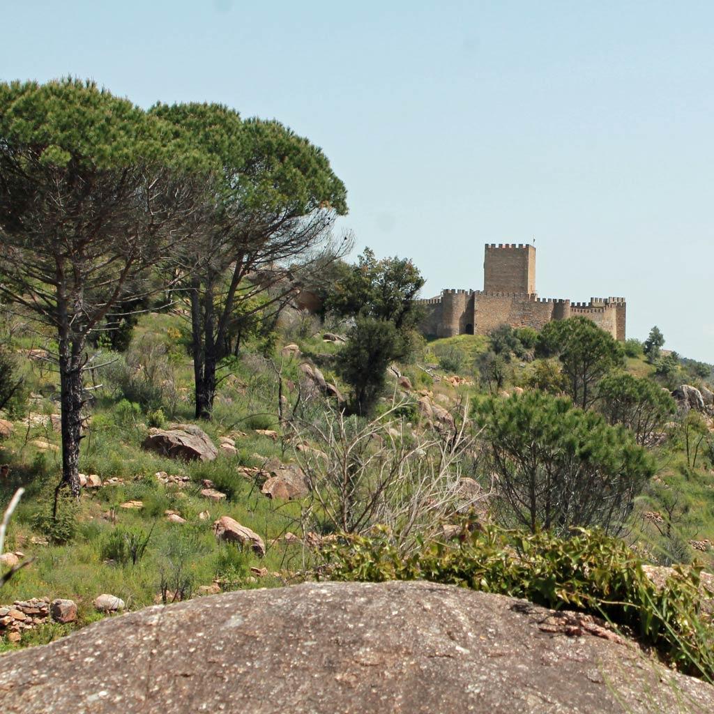 Die Festung von Belver aus der Ferne, mit Pinien im Vordergrund