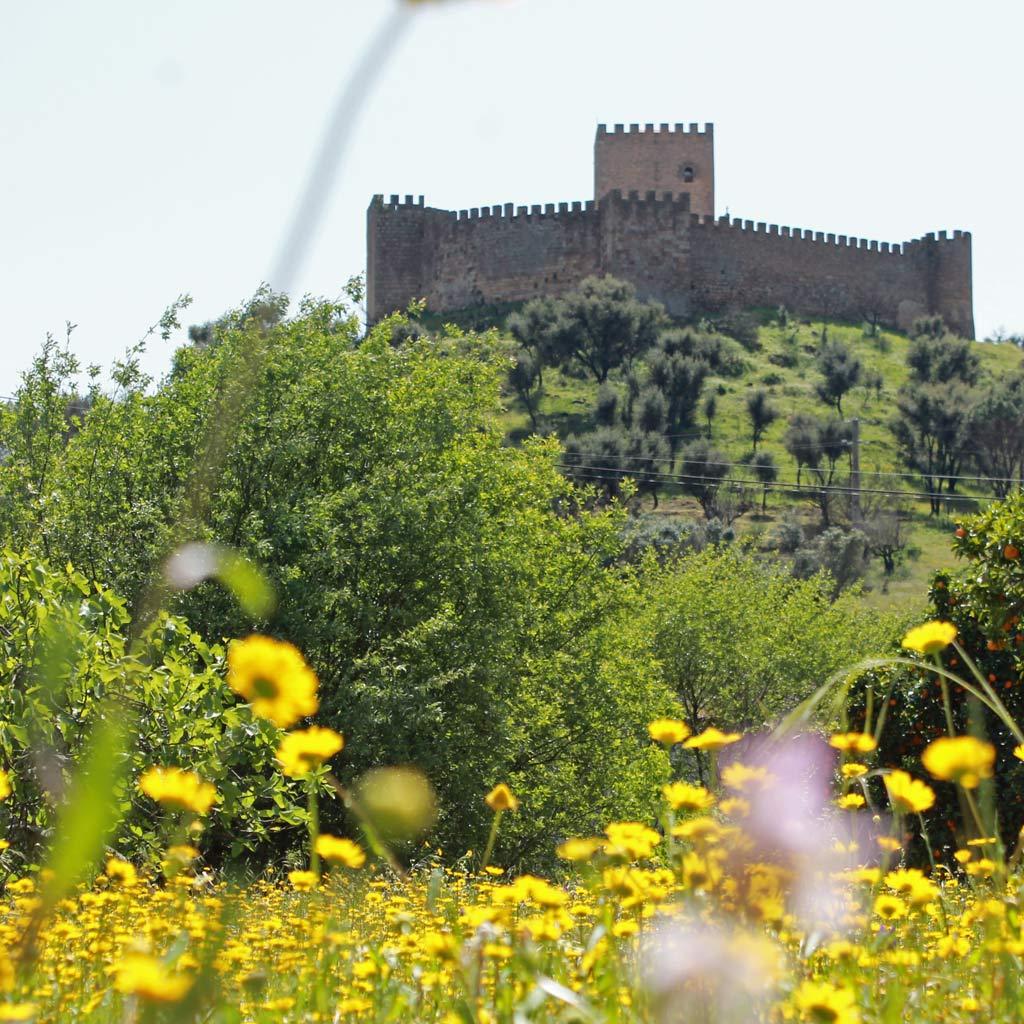 Blumen, Pinien und hohe Zinnen: Panorama der Burg von Belver beim Wandern im frühlingshaften Alentejo