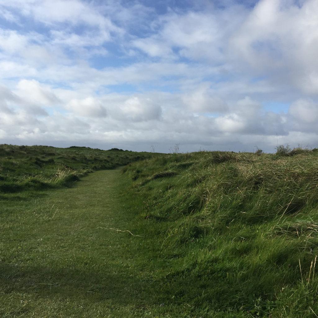 Ein Grasweg schlängelt sich vom Bildvordergrund in den Hintergrund. An den Seiten des Weges wachsen Gras und Sträucher wild in die Höhe.
