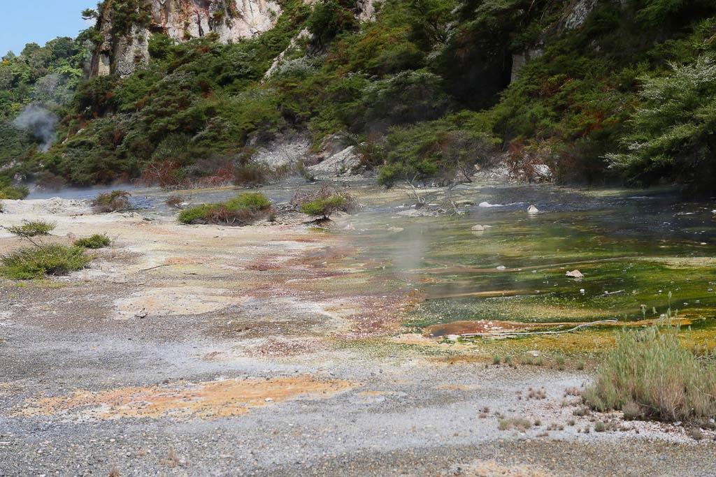 Farbige Algen im Waimangu Volcanic Valley an einem Wasserlauf.